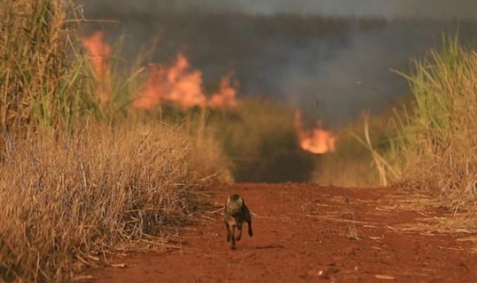 Fotos feitas na Amazônia mostram animais vítimas de queimadas