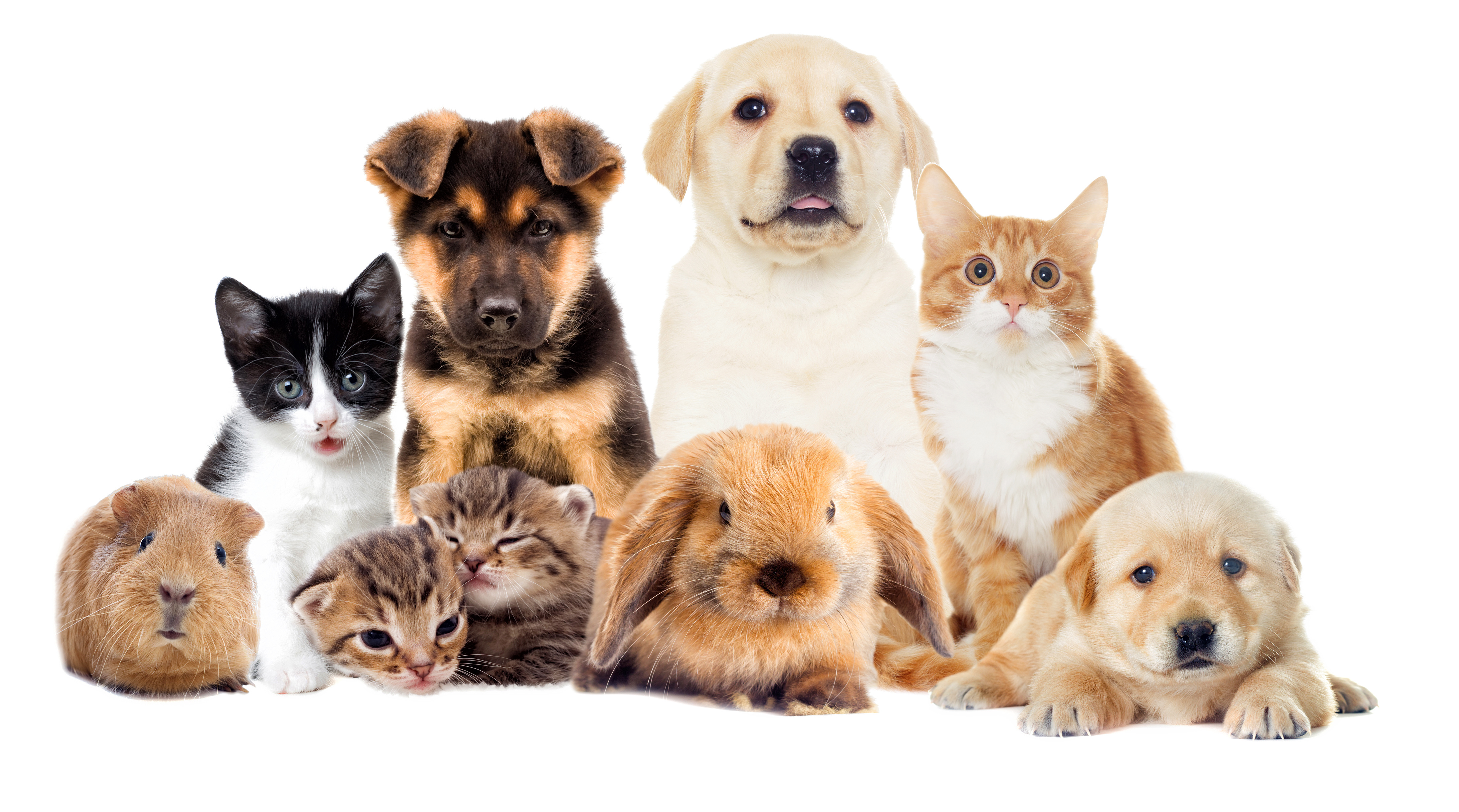 """Ministros do STF provaram """"auxílio pet shop"""""""
