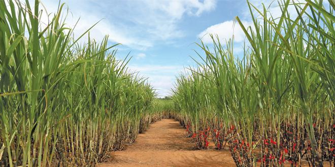 Pesquisadores desenvolvem método para produzir nova geração do etanol