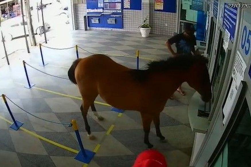 Cavalo invade casa lotérica e assusta funcionários e clientes em Cuité